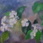 習作 紫陽花 étude,  Ortansia   31.8×41cm カンバスに油彩  l'huile sur toile   1996