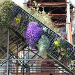 Chapelle fleurie devant les ruines