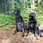 November 2011 Fylla und Seamus