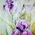 """Iris violet"" Format 40 x 50"