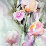 """Iris"" Format 50 x 60"