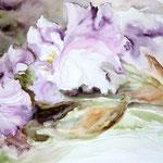 """Iris mauve"" Format 40 x 50"