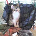 Sweety, adorable minette en famille d'accueil chez moi pour soins TTouch