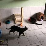 bienvenue chez les chats!