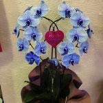 青いハート胡蝶蘭