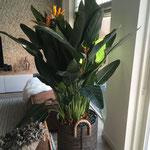 large : 10 a 15 planten per pot