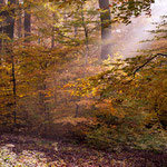 """Indian Summer"" in der Pfalz by Volker Abt"