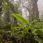 Nebelwald im Monteverde National Park by Volker Abt