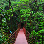 Hanging Bridges im Monteverde National Park by Volker Abt