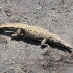 Krokodile am Rio Tarcoles by Volker Abt