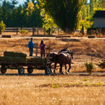 Farmer in Sequim, Wahington State by Volker Abt