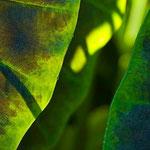 Green Leaf Study 1