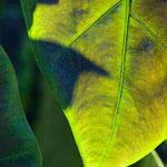 Green Leaf Study 2