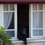 Dog Posing