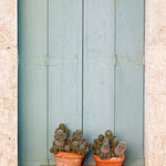 The Shutters and Cactus