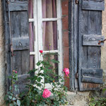 Village Shutters and Fall Roses