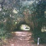 Der Blättertunnel, durch den es zur Treppe über die Dünen geht