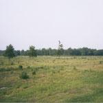 """""""... ein brachliegendes Stück Land mit viel Gras und Gestrüpp ..."""""""