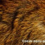 Agouti (wildfarben)