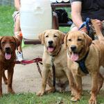 Xira, Rocky und Spencer