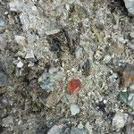 Kleiner Rosa Fluorit - Frunthorn Vals Graubünden Schweiz