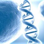 ADN DNA