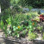 le massif se développe doucement même si certaines plantes sont mal en point !