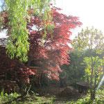 quelques vues du jardin au printemps