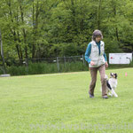 Obedience Mini American Shepherd