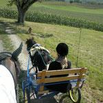Sulky fahren Sommer 2011