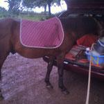 Geronimo hat das erste Mal eine Satteldecke auf dem Rücken, aber die Decke stört nicht weiter. Der Kofferraum ist viel interessanter :-D