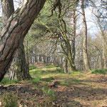 ...im schönen Pfälzer Wald