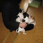 Der zweite Besuch von Frauchen, da bin ich 6  Wochen alt
