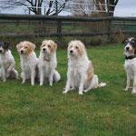 MEINE Damen von Tüskendoor - Snutje, Finy, Famke, Sally und ich