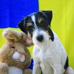Zur 19. Woche gehörte noch der Ostermontag, also noch ein Bild mit Hase