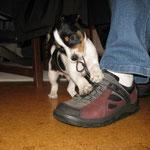 Auch die Schue