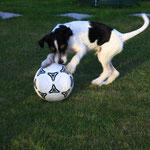 ...vor allem als der Fußball ins Spiel kan!