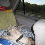 Relaxt auf der Autofahrt