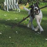 Und dann such im Garten wieder Stöckchen...