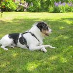 Relaxt im Gras, das gibts auch