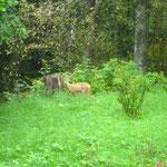 Welch komischer Hund am 1. Morgen im Garten