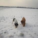 Ich und mein Freund DINO im Schnee - März 2012