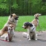 Meine tolle Truppe. Liily, Daika, Casimir und Ich. Lia fehlt leider heute