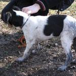 Erstes Maleur beim ersten Besuch in der Hundeschule. Bin in einen Tümpel gefallen