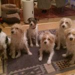 Familie Tüskendoor: Jette,Inka, Snutje, Famke, Sally und Mama Finy