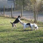 Selbstbewusste Dogie trifft auf Bjarne und da hinten ist auch noch einer