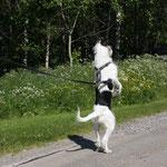 Und was ist da hinten für ein komischer Hund?