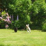 ...ab zu Freund Lucas in den Garten...