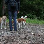 Ebbe, Deacon und Anjo