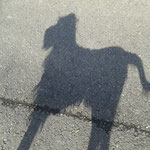 Mein Schatten :-)